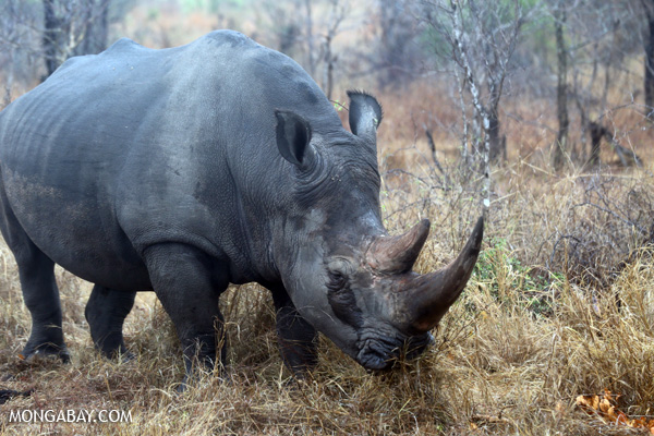 The Rhinos of the Namib (commentary)
