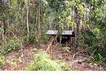 Ex-captive orang-utan learning forest survival skills at the Orangutan Care Centre and Quarantine in Pangkalan (Kalimantan, Borneo - Indonesian Borneo)