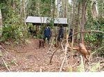 Workers with Orangutans at the Orangutan Care Centre and Quarantine in Pangkalan (Kalimantan, Borneo - Indonesian Borneo) -- kali0039