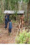 Workers with Orangutans at the Orangutan Care Centre and Quarantine in Pangkalan (Kalimantan, Borneo - Indonesian Borneo) -- kali0049