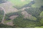 Aerial view of rainforest that has been slash-and-burned for agriculture (Kalimantan, Borneo - Indonesian Borneo)