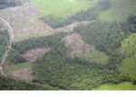 Forest that has been drained then slash-and-burned for agriculture (Kalimantan, Borneo - Indonesian Borneo)