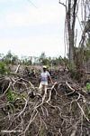 Thomas standing among charred remains of tropical rainforest in Borneo (Kalimantan, Borneo - Indonesian Borneo)