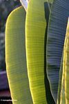 Sun accented palm leaves