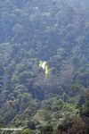 New logging road outside Taman Negara National Park