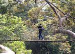 Tourist on a canopy walkway in Taman Negara
