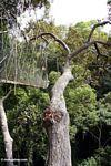 Canopy walkway at Taman Negara -- malaysia0461