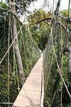 Malaysian canopy bridge