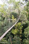Rain forest canopy walkway at Taman Negara