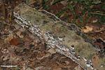 Black and white fungi on a rotting log