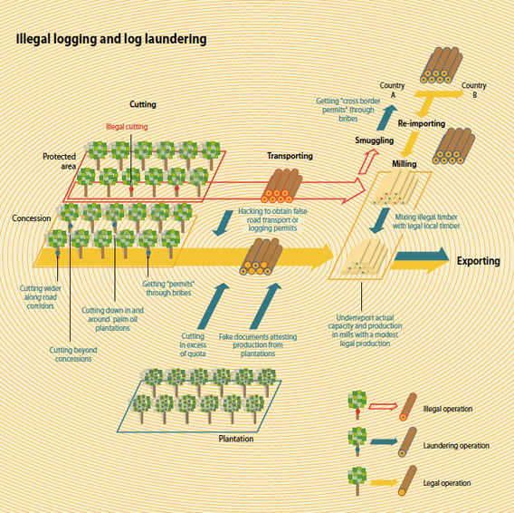 Illegal logging and log laundering