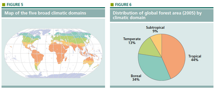 Distribution of global forest area (2005) by climatic domain