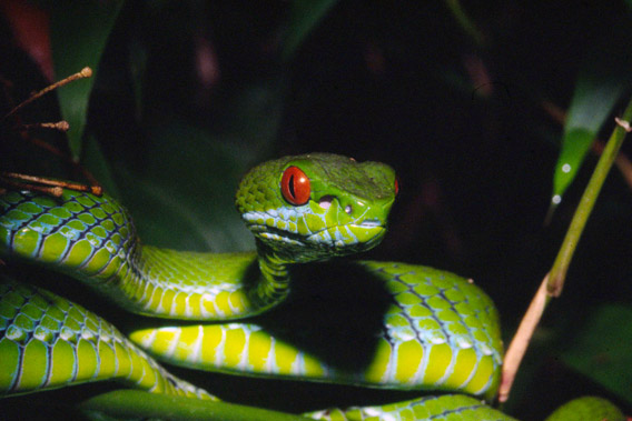 Pictures 126 New Species Discovered In Greater Mekong Region Last Year