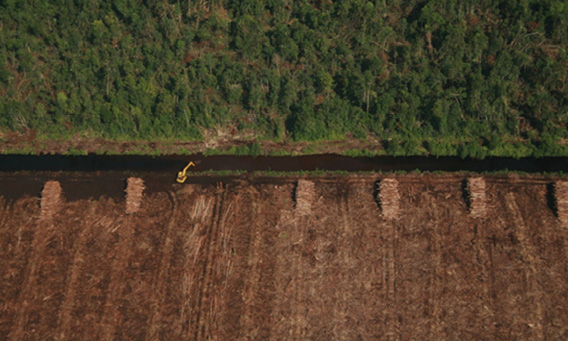 "Peat drainage canal and stacks of MTH harvested from forest clearance by APRIL wood supplier PT. RAPP in Kampar peninsula. Some CITES-protected ramin trees were ""saved"" and left standing. Photo taken by Eyes on the Forest at N°17'52.36"" E102°43'22.29"" on 10 February 2012."