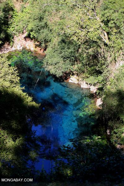 Turquoise blue water of Bonito's Lagoa Misteriosa, a collapsed limestone cave.