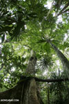 Rainforest on Nosy Mangabe, Madagascar (Oct 2012). Photo by Rhett A. Butler