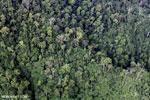 Borneo rainforest (May 2012). Photo by Rhett A. Butler