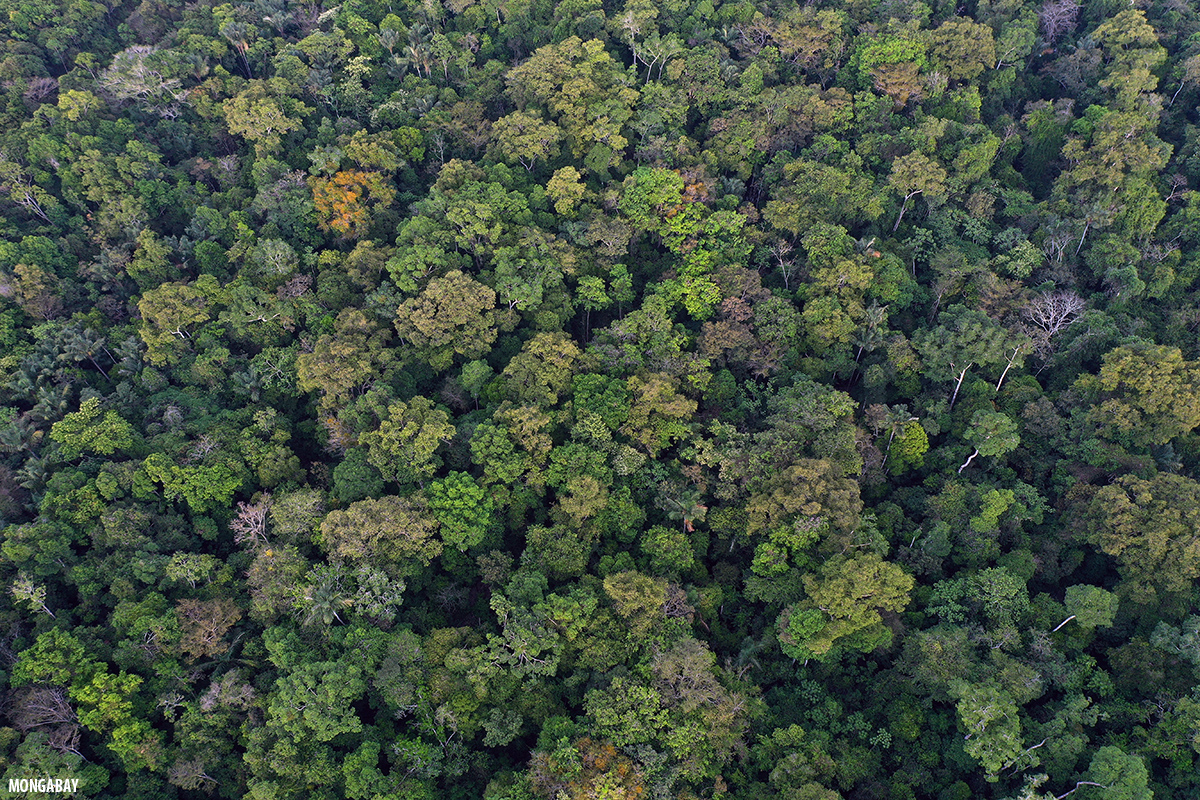 Types Of Forests Understand the heading forest area lying in the tropical region and is evergreen let us see some characteristics? types of forests