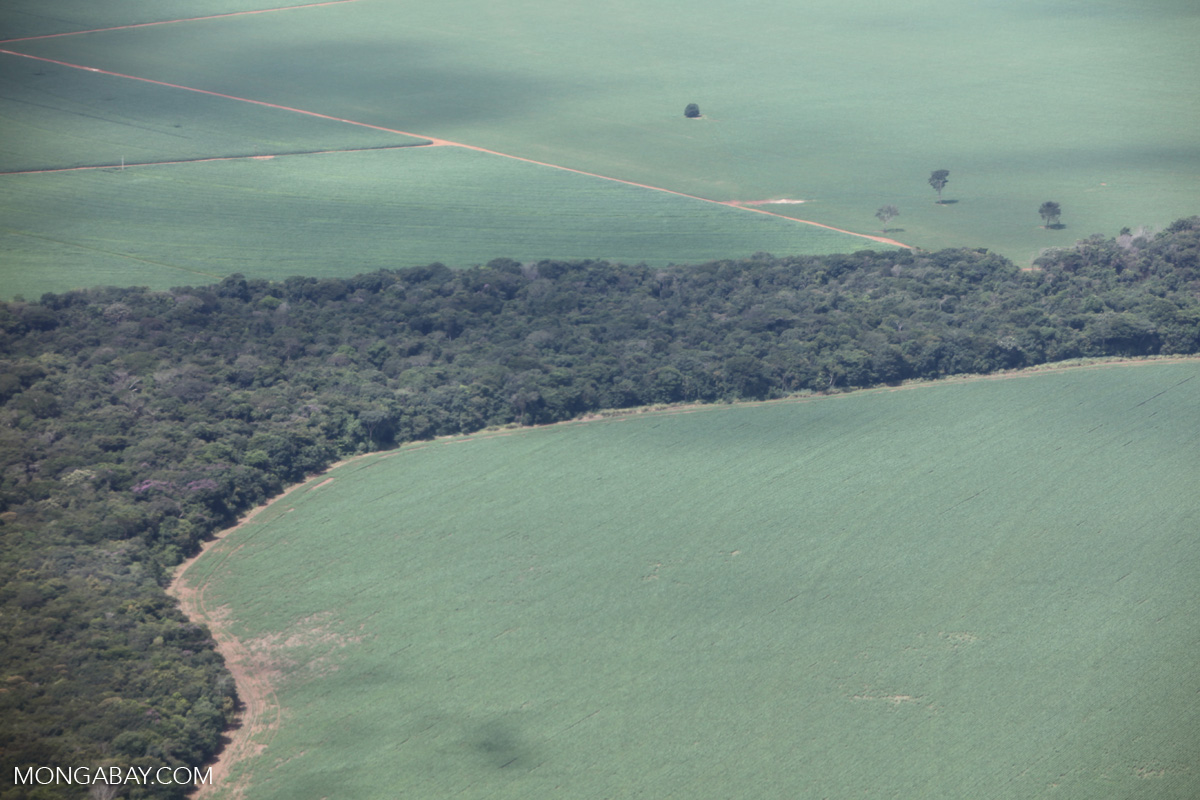 Soy with a strip of legal forest reserve in Mato Grosso, Brazil. Photo by Rhett A. Butler