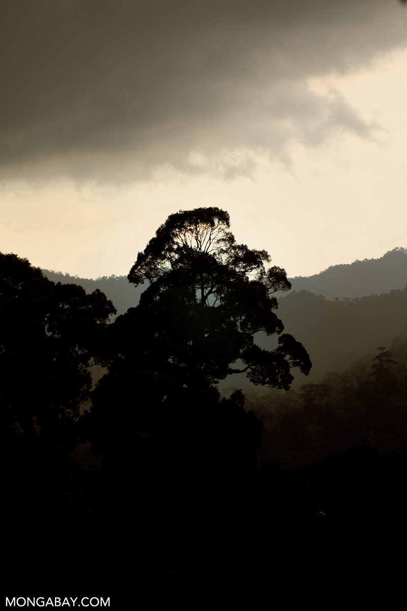 Last year DiCaprio gave money towards protection of Bukit Tigapuluh National Park in Sumatra (pictured).