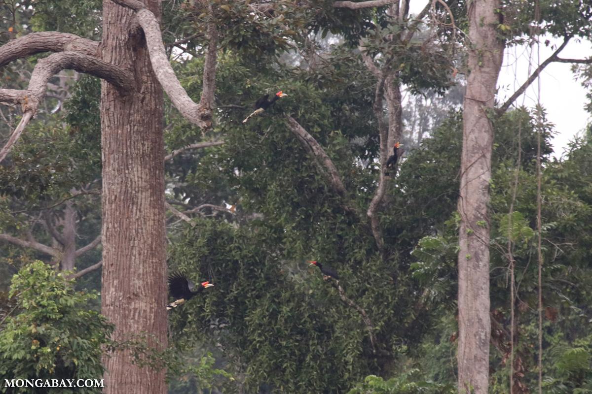 Sabah 16255