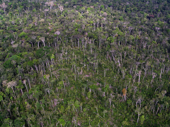 Tree blowdown in the Amazon.