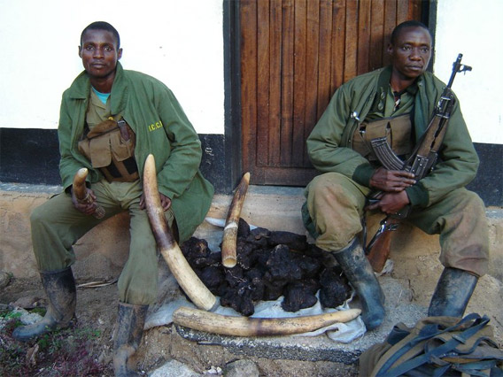 Elephant massacre in the Congo