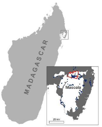 Deforestation In Key Madagascar Park Accelerated After Coup D - Madagascar map outline