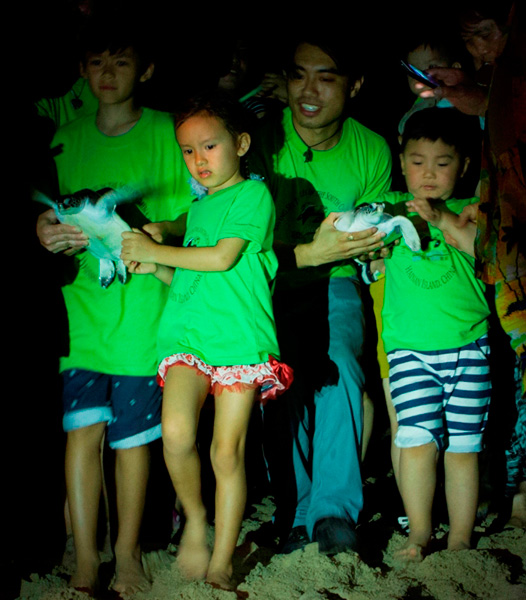 Sea Turtles Released During Earth Hour