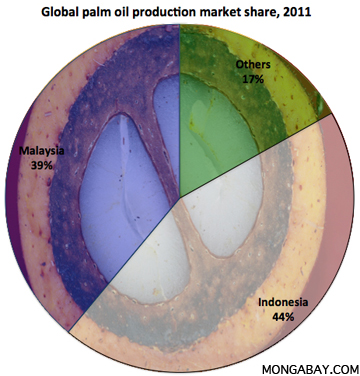 global palm oil market share