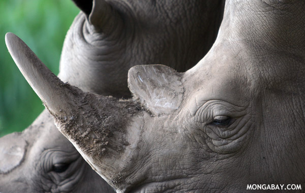 Rhinos now extinct in Mozambique's Limpopo National Park