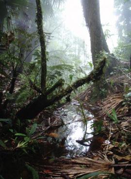 El hábitat de las víboras de pestañas verdes, iBothriechis guifarroi/i, en el Refugio de Vida Silvestre Texíguat, al norte de Honduras. Los parientes más cercanos de este reptil se encuentran a cientos de kilómetros al sur, en las montañas de Costa Rica.  Crédito de la foto: Josiah H. Townsend