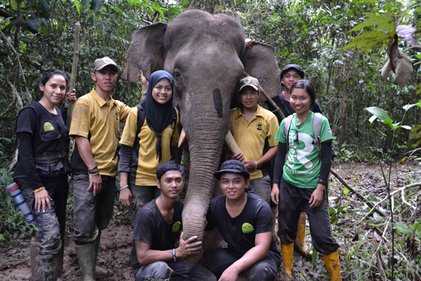 Five elephants collared in Bornean wildlife sanctuary