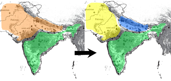 There were two historical tiger populations (Left): the peninsular and northeast Indian population (green) and the north Indian population (orange). Current populations (right) have three sections: the semi-arid tigers (yellow), the Terai tigers (blue) and the peninsular-northeastern (green), each being very different from one another. Map adapted from Mondol et al 2013).