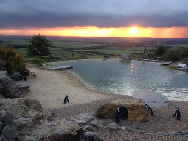 Penguins and people alike enjoy the sunset at Whipsnade Zoo