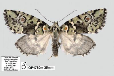 Stunning moth species discovered in the mountains of China