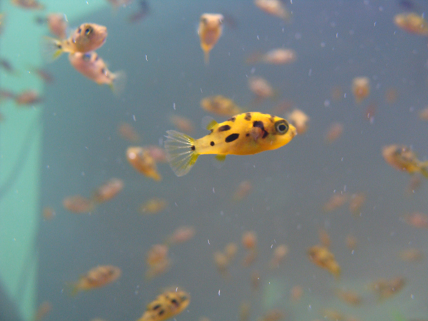 Rare and threatened freshwater fish plundered for aquarium ...