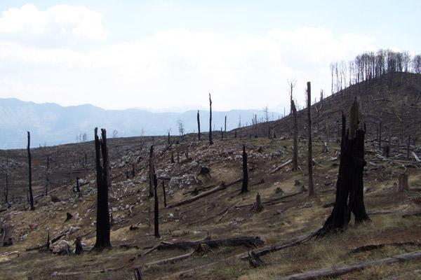 L'habitat du lynx détruit dans la montagne de Munella en Albanie ©Aleksander Trajce PPNEA