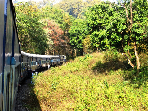 Kanchankanya express train inside Mahananda Wildlife Sanctuary.  Photo by Shreya Dasgupta.