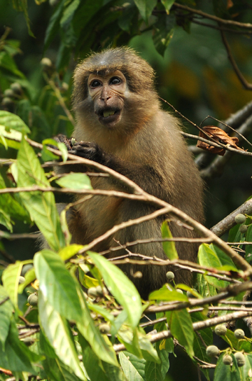 Safeguarding nine priority areas could protect all of Tanzania's primates