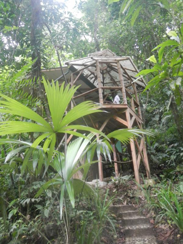 Life in the canopy: a Costa Rican treehouse community