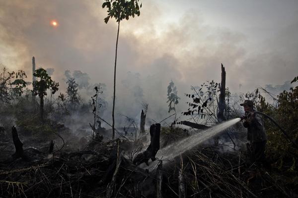 Um trabalhador da PT. Raja Garuda Mas Sejati – uma empresa de óleo de palma que pertence ao grupo Asian Agri, membro da RSPO – tenta extinguir um incêndio numa turfeira dentro da exploração da empresa perto da aldeia Tanjung Muara Sako, subdistrito Langgam na regência Pelalawan, província de Riau, Indonésia.