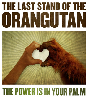 Last stand for orangutans