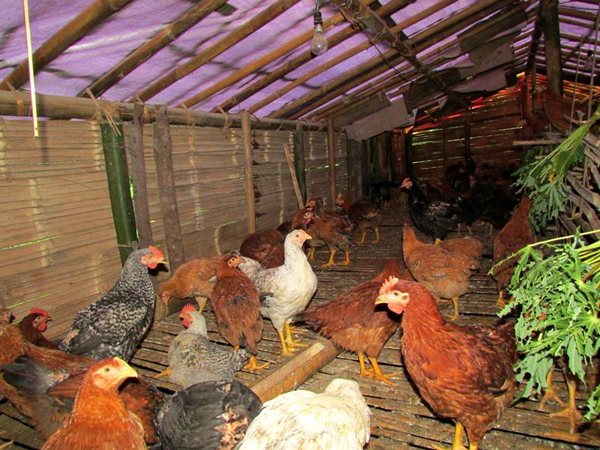 Poultry farms set up by Natural Nagas and WTI. Photo by Steve Odyuo.