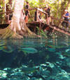 Freshwater cenote near Bonito, Brazil (Jun 2012). Photo by Rhett A. Butler