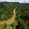 Borneo rainforest river