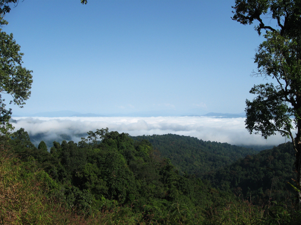A new study by the Wildlife Conservation Society examines the potential implications of growing economic development and climate change on the biodiversity of Myanmar, home to wild places such as the Hukaung Valley. Photo courtesy of WCS Myanmar Program.