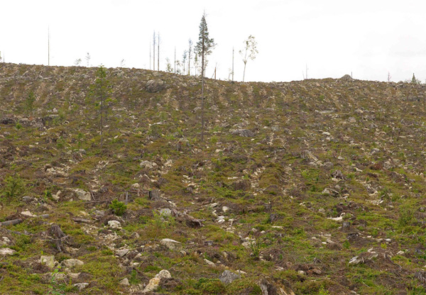 Clearcut forest on a hillside in Sweden