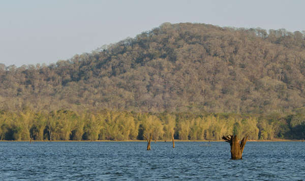 photo essay notes from s kabini river  state of kerala into karnataka while doing so it passes through one of the most pristine wildlife reserves in the country this forest patch has been