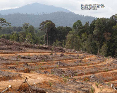 Land preparation in PT Trieka Agro Nusantara, in violation of the RSPO's New Planting Procedure (NPP).